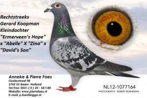 NL12-1077164