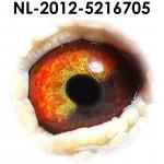 NL12-5216705