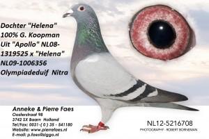 NL12-5216708