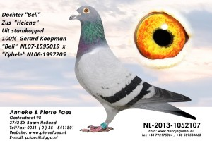 NL13-1052107