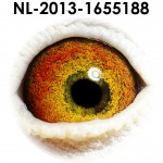 NL13-1655188