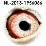 NL13-1956066