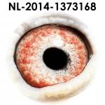 NL14-1373168