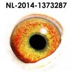 NL14-1373287