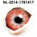 NL14-1781417